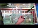 САМОДЕЛЬНЫЙ ИНКУБАТОР ДЛЯ ЯИЦ АРТЕМИИ. Home-made incubator for eggs Artemia salina