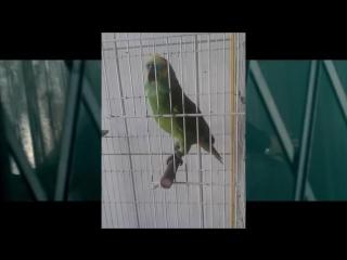 Eminem ft. Попугай