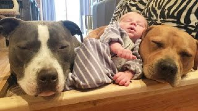 4 собаки и кошка, ухаживающие за новорождённым, растрогали пользователей интерн ...