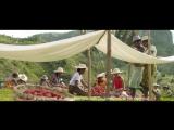 Dior Gardens- Madagascar