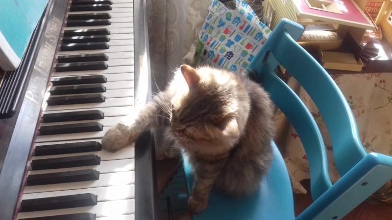 Кошка Мася играет на пианино-2