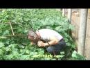 Ремикс на Доктор Попов-лечение гемороя огурцом