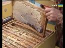 Як відрізнити справжній мед від отрути Секретні матеріали