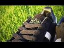 Обзор на Adidas Spezial