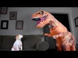 T-Rex Befriends Dog: Funny Dog Maymo