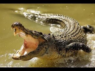 Tunis. Крокодиловая ферма Тунис.Остров Джерба п. Мидун. Crocodile farm Tunisia. Djerba Midoun
