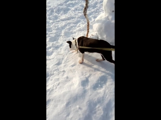 снеговик:)не страшно уже:)