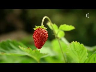 Francetv zoom - La forêt séveille et nous offre un... (1)