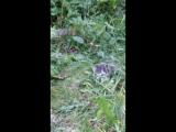 Пойманная мышь мамкой-отличный предмет для тренировок))!