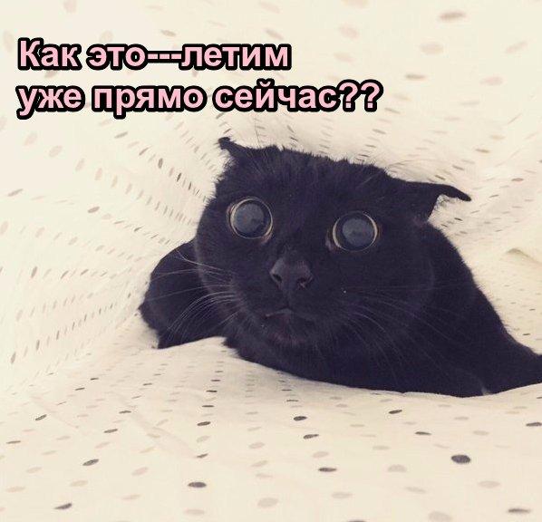 https://pp.userapi.com/c626518/v626518498/1dcec/2JqSuqtRfRI.jpg
