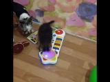 Веня, которого племянница приняла за приведения из за любви к музыкальным игрушка, по ночам
