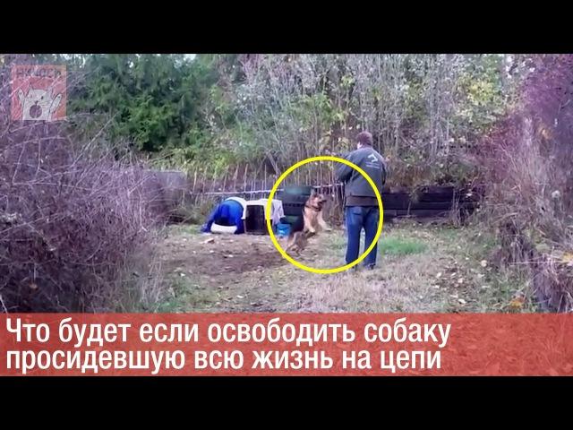 спасение собаки с цепи