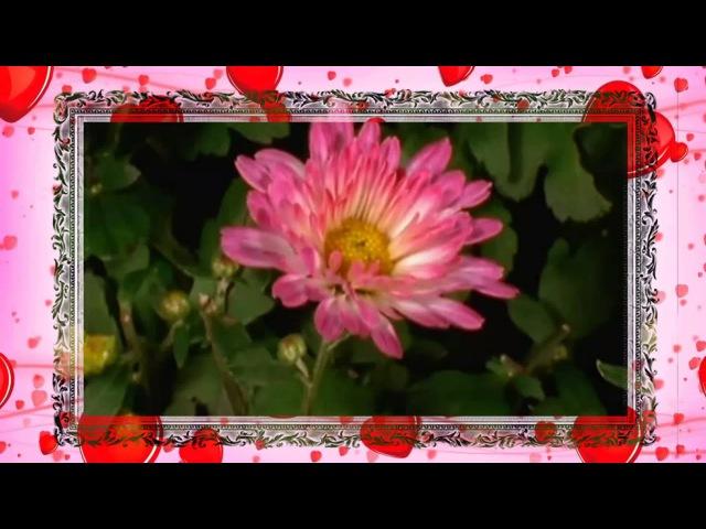 Самый красивый танец цветов Необычное и яркое поздравление