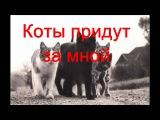 DJ Project feat. Giulia - Mi-e dor de noi (Misheard lyrics) на русском
