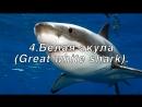 ТОП 5 САМЫХ БОЛЬШИХ АКУЛ TOP 5 BIGGEST SHARKS Мегалодон Megalodon