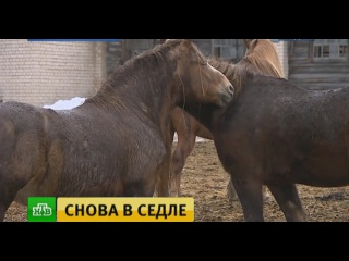 Костромские энтузиасты возродили легендарный племенной завод орловских рысаков