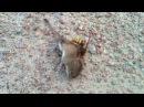 Битва животных Мышь против осы