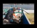 Как разводят осетров в Астрахани kak eto sdelano