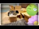 ★ Сборник: Смешные Кошки! ★ lustige Katzen
