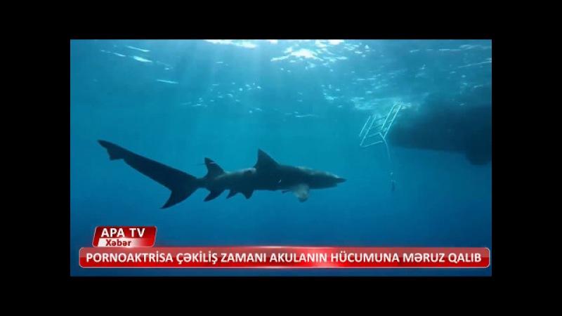 Акула напала на актрису : The shark attacked the actress