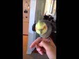 Попугай поёт дабстеп