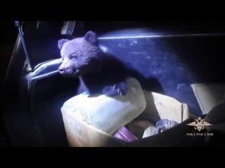 В Коми сотрудники полиции в картонной коробке на автодороге обнаружили двух мед...