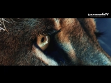 Marcus Schossow feat. The Royalties STHLM - Lionheart (Official Music Video)
