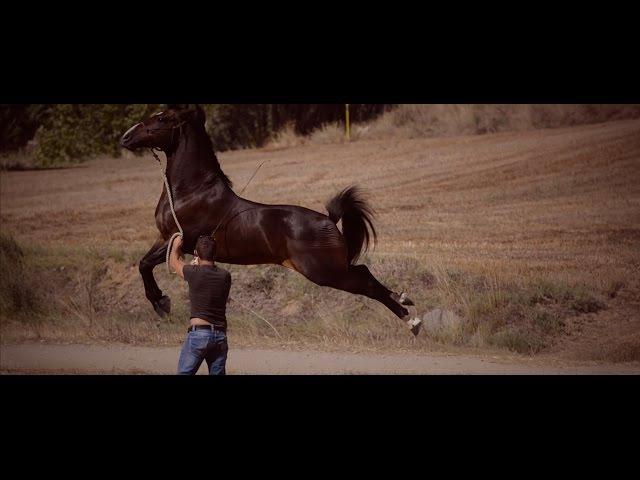 Miron Bococi Free Style Horse Show by Irene Suárez Studio