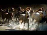Александр Поручикъ. Не гоните вы коня, годы.