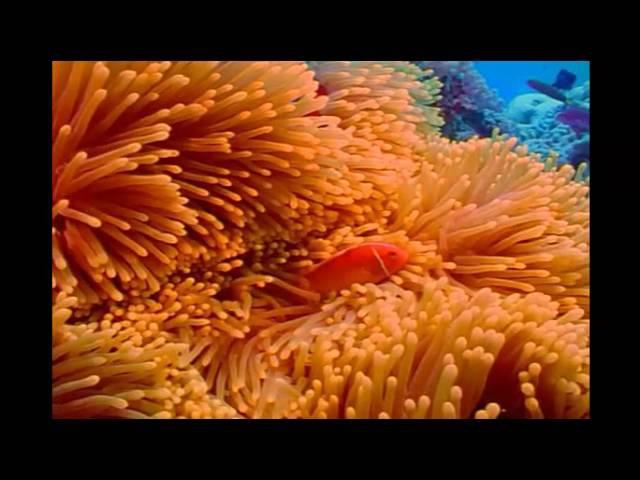 Great Barrier Reef. Большой барьерный риф. Красочный подводный мир. Австралия.