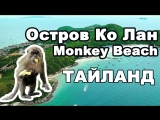 Как за 150 бат отдохнуть на острове Ко Лан? Паттайя (Пляж Обезьян, Monkey Beach, Pattaya)