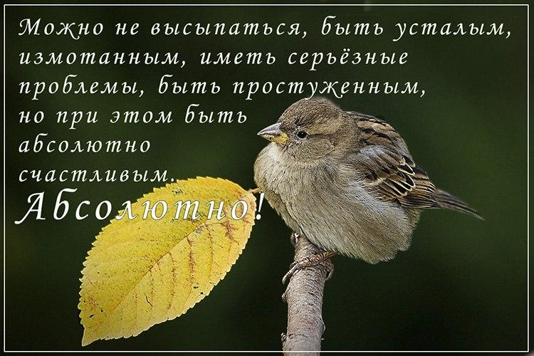 https://pp.vk.me/c626521/v626521093/239d6/olDgnQTGaAU.jpg