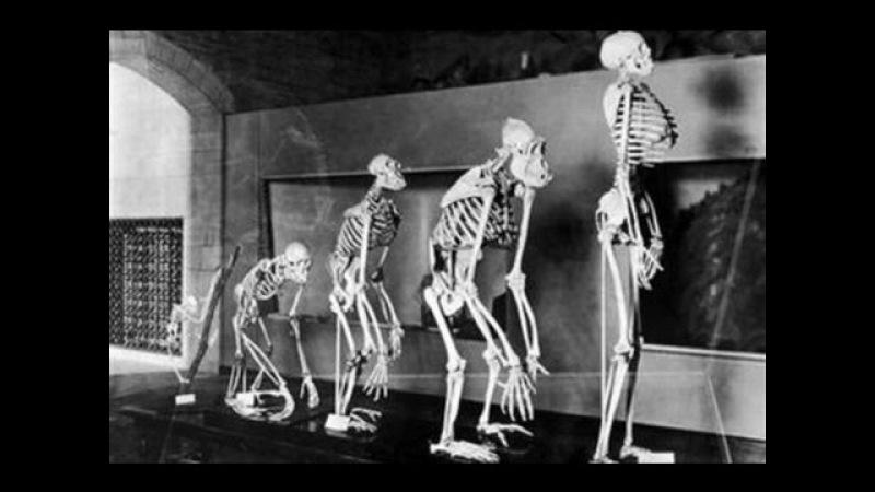 Тайна происхождения человечества. Теории и факты. Документальный фильм