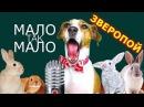 ЕГОР КРИД МАЛО ТАК МАЛО СОБАКА ДЖИНА ПОЁТ ЗВЕРОПОЙ Elli Di Pets