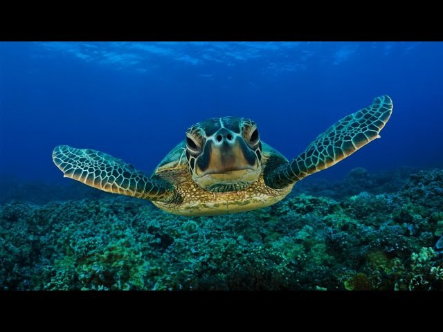 ★❤★ GIANT SEA TURTLES CORAL REEF FISH 3 HOURS BEST RELAX MUSIC 1080p HD ★❤★
