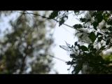 гелиос 44-2 лес