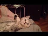 Пластилиновый котик