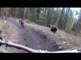 Голодный медведь встретил велосипедистов в лесу