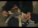 как приучить собаку стричь когти