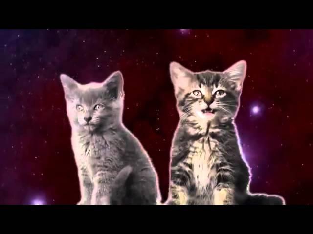 Песня котов