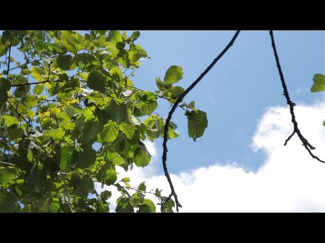 Антонио Вивальди - Летняя гроза (Шторм)