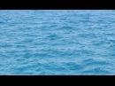 Заплыв в красном море с дельфинами. Египет 2014 год отель The Movie Gate Hurghada 4*.