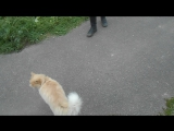 Кто живёт в Простоквашино? Фауна района. ВидеоМИГ. Таисия Эпанаева, незветный кот. Игорь Эпанаев.