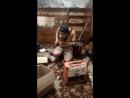 Клемент Джоэл - Когда Нина не идет на шашлыки