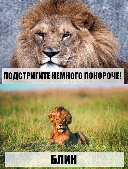 http://cs626523.vk.me/v626523831/13134/1leXYEMX--k.jpg