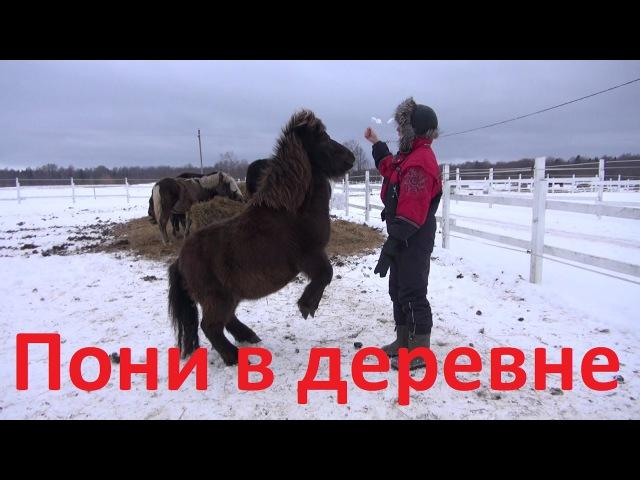 Как можно использовать пони в деревне.