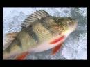 Диалоги о рыбалке. Зимняя рыбалка.06.Саратов Городская рыбалка Мормышка плотва.[2008, DVDRip].
