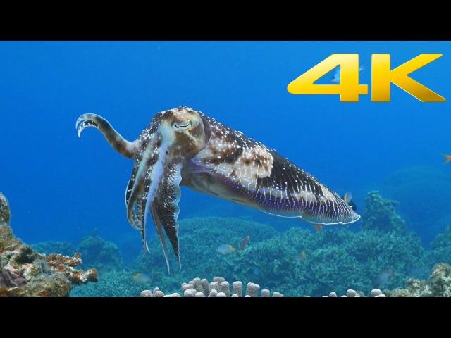 Sony 4K Demo Beautiful Sea in Okinawa