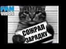 приколы с котами смешные коты милые котики приколы под музыку кошки лучшие прик ...