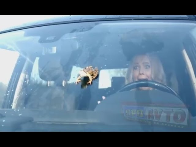 Осторожно тупые дуры за рулем Типичные блондинки